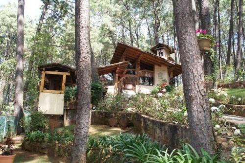Cabana del Panda 19