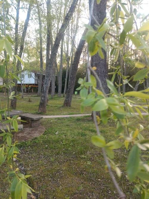 Cabana islena del bosque 1