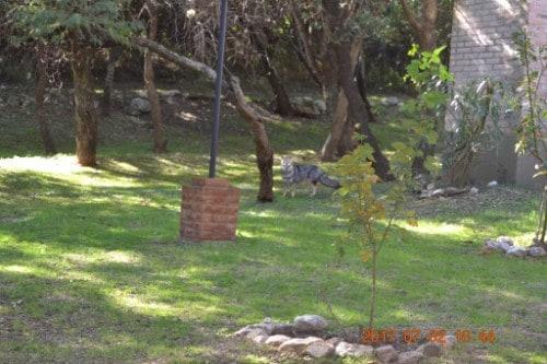Cabanas del Bosque 15 1